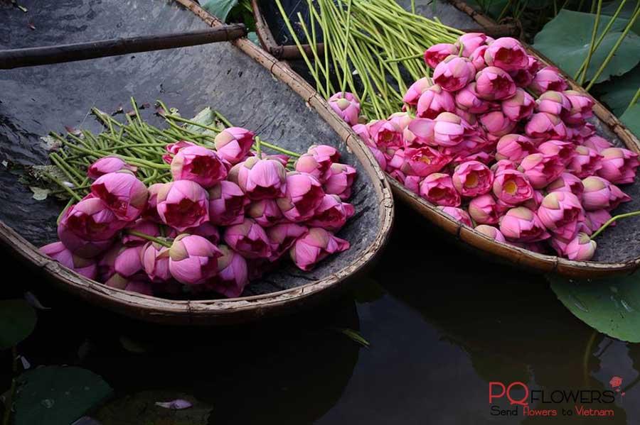 Lotus Flower - The national flower of Vietnam 200321