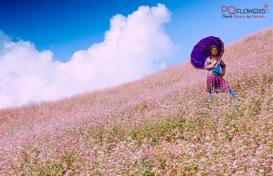 flower seasons in vietnam-290321-00
