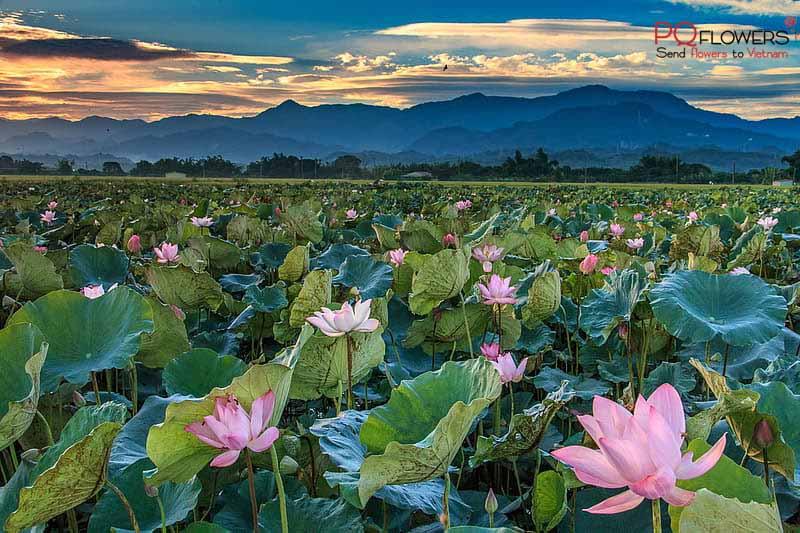 dong-thap-flower-shop-vietnam-250421