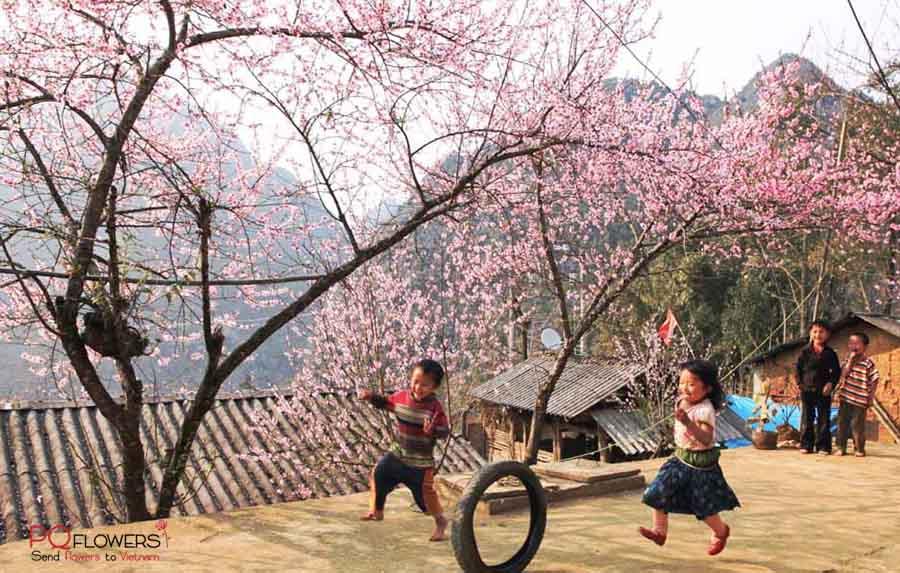 ha-giang-flower-shop-vietnam-260421