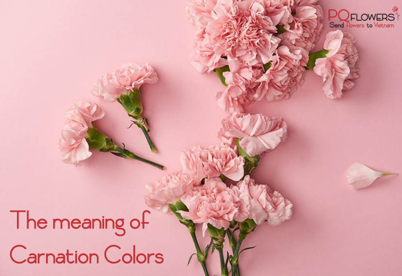 The -meaning- of -Carnation- Colors-300921-00001